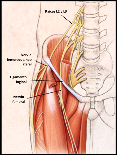 Atractivo Síndrome De Cresta Ilíaca Ornamento - Anatomía de Las ...