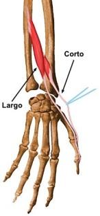 La curación adecuada de la tendinitis del pulgar y