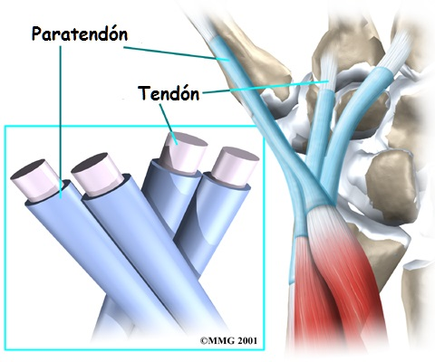 Métodos de superasy para aprender cada parte sobre dolor lumbar izquierdo