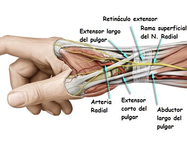 Tendinitis del extensor largo del pulgar